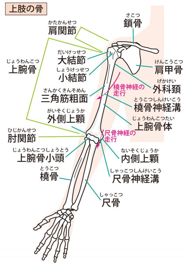 関節の歪みはばね指の原因になります。