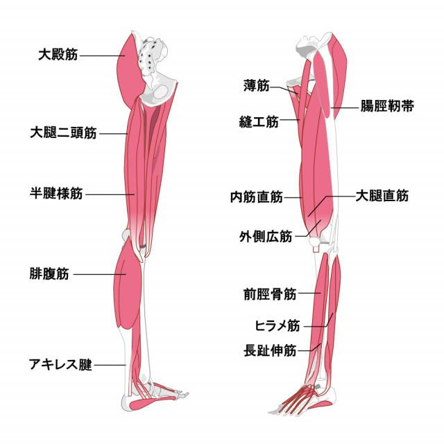 変形性膝関節症への当院のアプローチは?