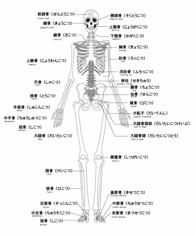 膝痛への当院のアプローチは?